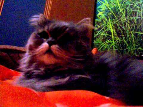 самый милый кот люся