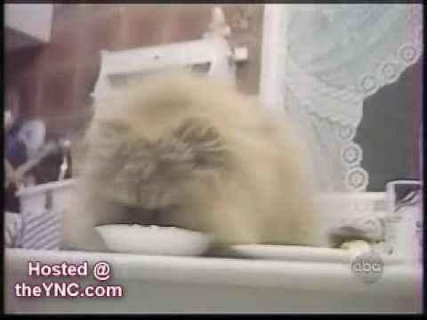 Супер смешные коты funny cats