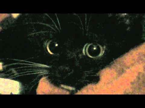 Котёнок ужас в глазах манюня horror