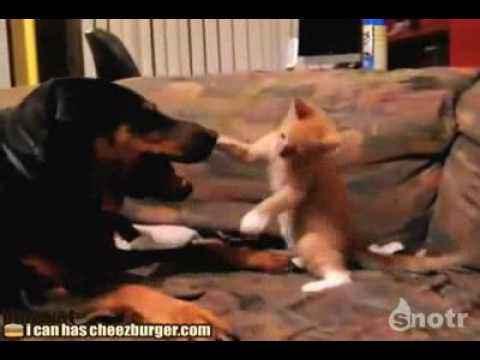 Кот против собаки..flv
